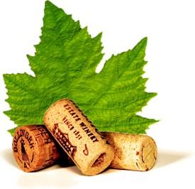 Rešitev SAOP iCenter vinarjem poenostavlja vrsto opravil in procesov