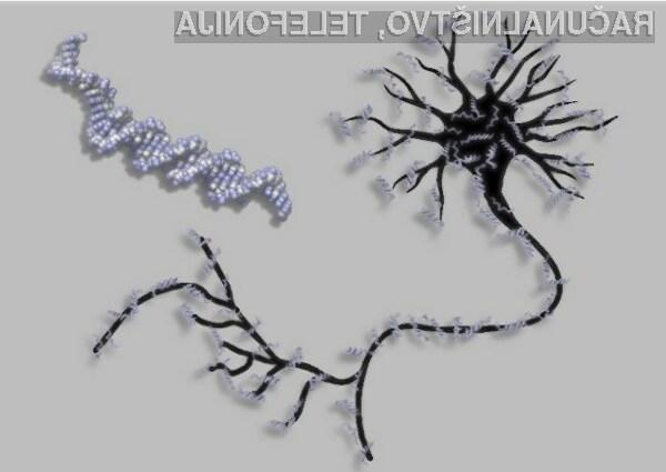 Bio-mehansko vezje je brez težav »odgovarjalo« na 20 enostavnih vprašanj.