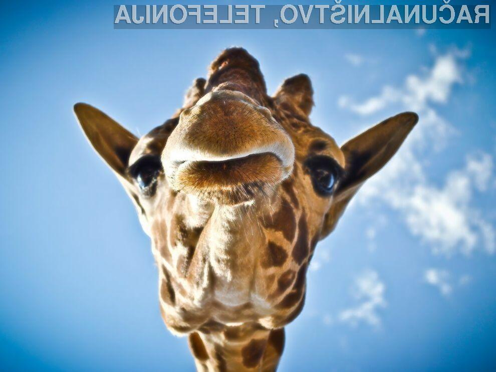 Kaj je z vsemi temi žirafami na Facebooku?!