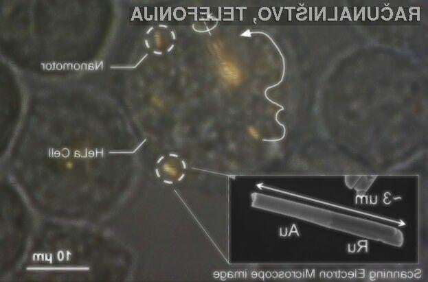 Nanomotorji naj bi omogočili usmerjeno zdravljenje rakavih bolezni na celičnem nivoju!