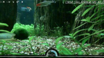 Slab dan v službi? Spočijte se ob opazovanju akvarija in nahranite ribe