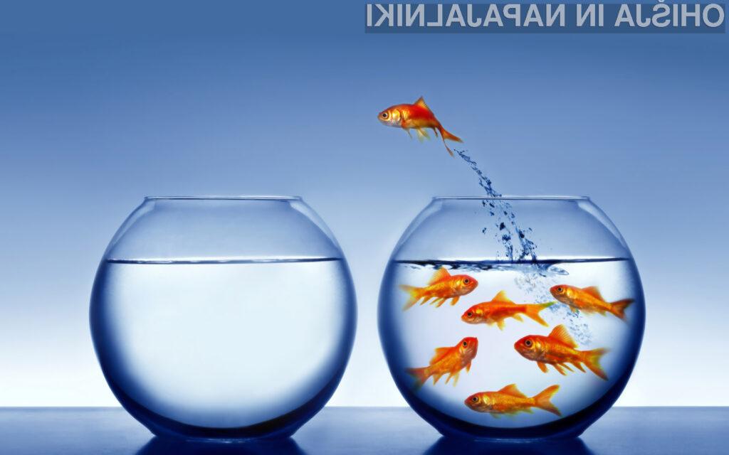 Zlata ribica spoznava svet zunaj svoje bučke