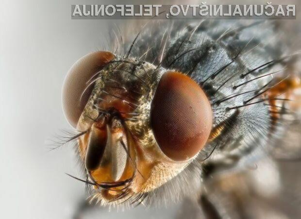 Znanstveniki medicinskega inštituta Howard Hughes Medical Institute bodo s preizkusi na insektih poskušali razvozlati zapleteno delovanje človeških možgan.