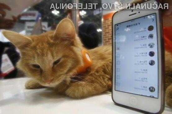 Namenska ovratnica podjetja Anicall lastnikom mačk in psov omogoča sledenje navadam njihovih ljubljenčkov.