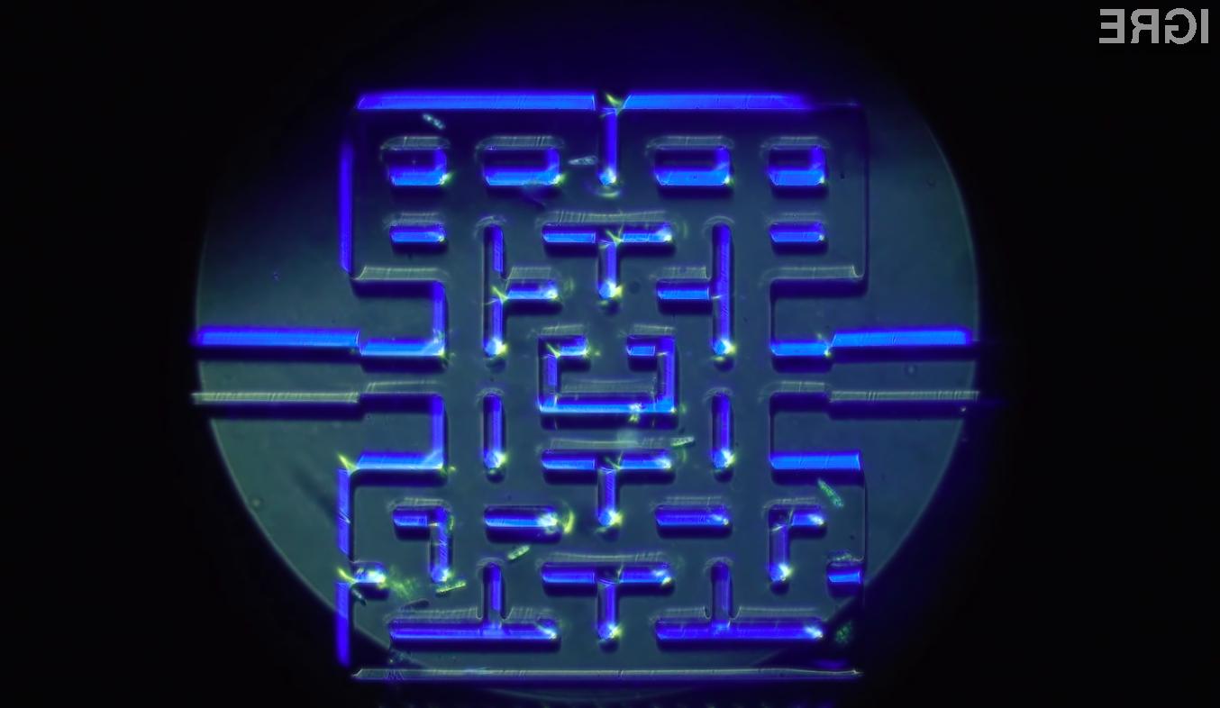 Enocelični mikroorganizmi se odlično obnesejo pri »igranju« igre Pac-Man.