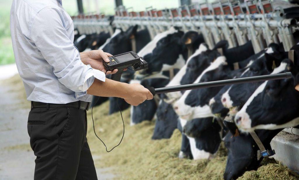 Ko rejec živali potrebuje določene podatke uporabi RFID čitalec ter tako na enostaven način te podatke prebere ter jih prenese v podatkovno bazo za analizo.