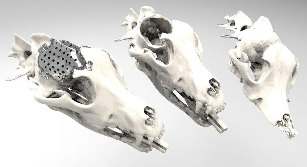 3D-natisnjeni protetični pripomočki in vsadki za živali