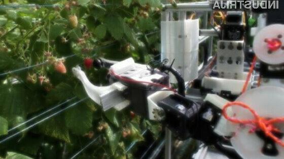 Avtonomni robot bo nabral več kot 25.000 malin na dan